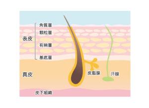 つらい肌かゆみ「肌のバリア機能」の乱れが原因かも!?