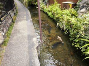 いがわ小径の水路と鯉